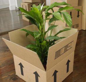 trasloco piante
